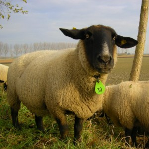 La oveja negra nº 30